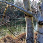 drzewo nad jeziorkiem